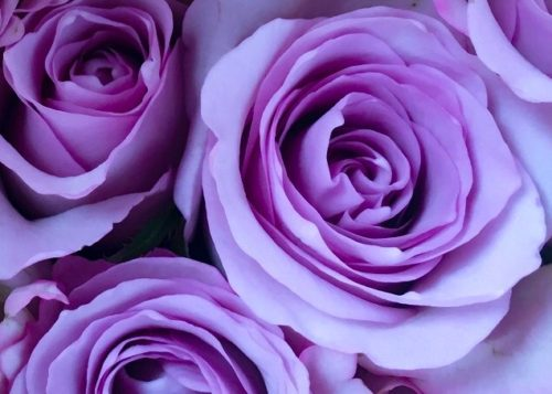 色彩進路・カラーセラピーの色の意味:紫・バイオレット・パープル