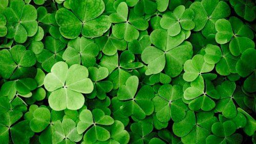 色彩心理・カラーセラピーの色の意味:グリーン・緑
