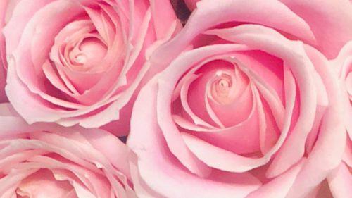 色彩心理・カラーセラピーの色の意味:ピンク