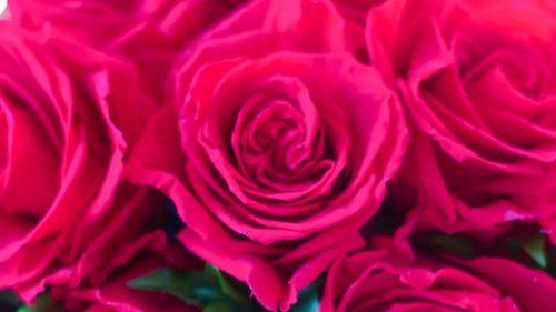 色彩心理・カラーセラピーの色の意味:マゼンタ・赤紫